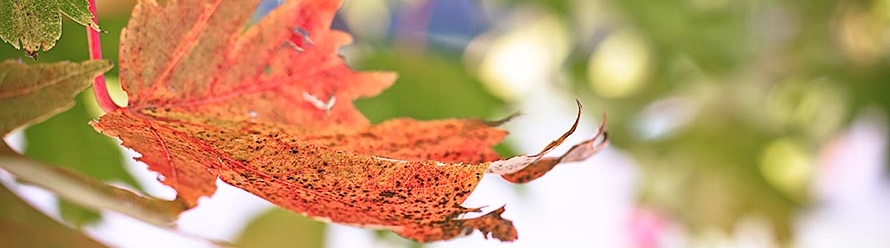Inspired by Autumn – Photography Challenges