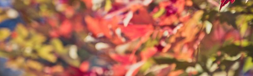 Nurture Photography: Orange/Warmth